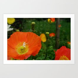 Flower Power. Art Print