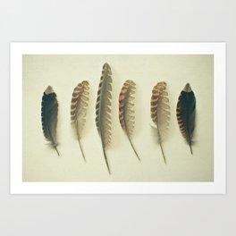 Feathers #2 Art Print