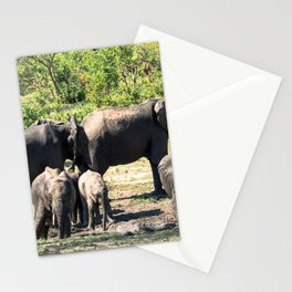 African elephants taking mud bath Stationery Cards
