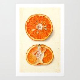 Vintage Painting of Tangerines Art Print