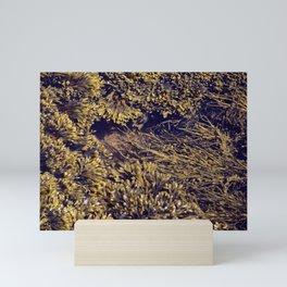 Rockweeds Mini Art Print
