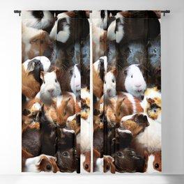 Guinea Pigs Blackout Curtain