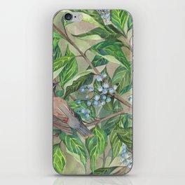 Cedar Waxwings bird and berries iPhone Skin