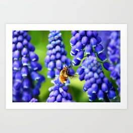 Abuzz Among the Muscari Art Print