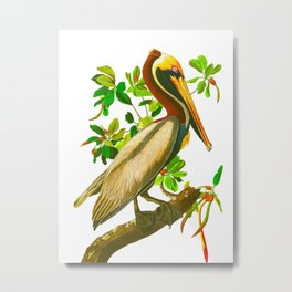 Brown Pelican Vintage Illustration Metal Print