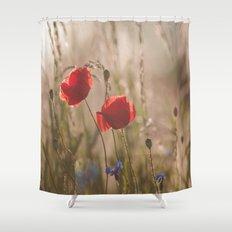 Poppy in sunrise my world Shower Curtain