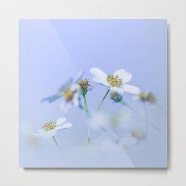 Daisies in the spring Metal Print