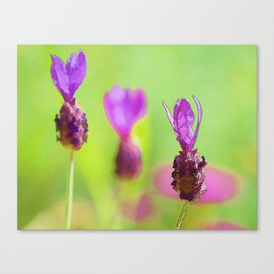 Lavender Bud Painting Canvas Print