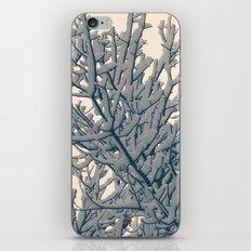 Winter Layers iPhone & iPod Skin