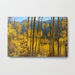 Aspen Autumn Forest 7450 - Aspen, Colorado Metal Print