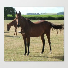 Stringston Horses Canvas Print