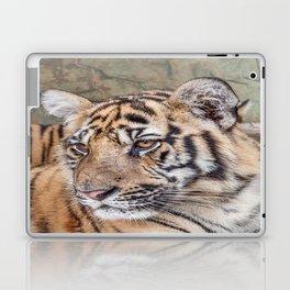 Tiger, Medium Indo-China Laptop & iPad Skin