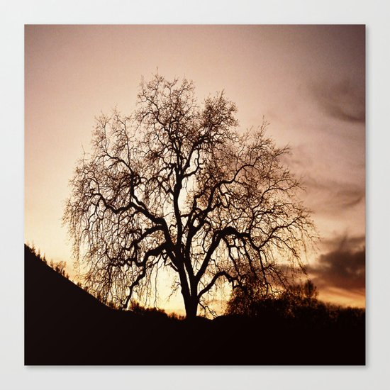 The Tree of Life... Canvas Print