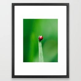 Balancing Acts Framed Art Print