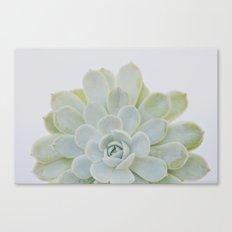 succulent 04 Canvas Print