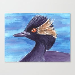 Grebe bird Canvas Print