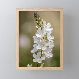 Wild Hyacinth in White and Pink Framed Mini Art Print
