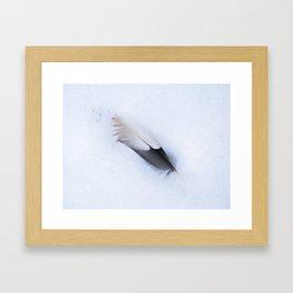 Fallen Feather Framed Art Print