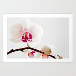 The Orchid that Refused to Sit Still Art Print