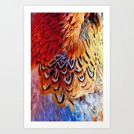 Pheasant Feathers Art Print