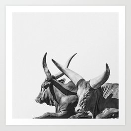 Cow Photography | Ankole-Watusi | Cattle | Bull |Steer Art Print