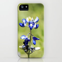 Last of the Bluebonnets iPhone Case