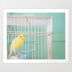 Yellow Bird against Turquoise Wall Art Print