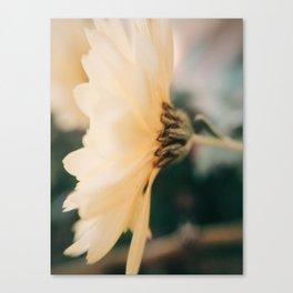 Soft Yellow Flower Canvas Print
