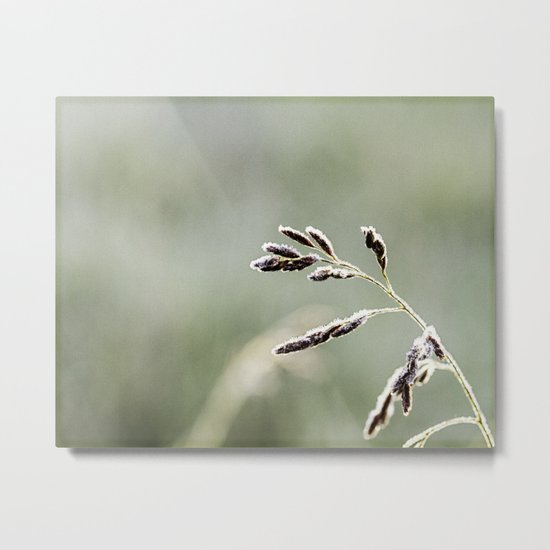 frosted weed Metal Print