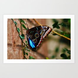 Colorful Butterfly Art Print