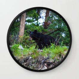 Young bear in Jasper National Park Wall Clock