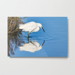 Snowy Egret Reflection at Bolsa Chica Ecological Reserve in Huntington Beach, California Metal Print