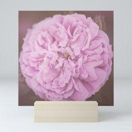 Camellia Mini Art Print
