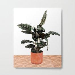 Calathea Planter Metal Print