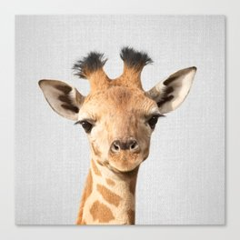 Baby Giraffe - Colorful Canvas Print