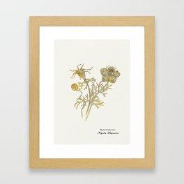 Nigella Hispanica, gold Framed Art Print