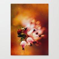 heathers Canvas Prints featuring Impression with heathers by Jaroslaw Blaminsky