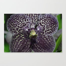 Brazen Bloom Canvas Print