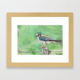 American Kestrel Framed Art Print