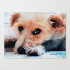 Toffee dog Canvas Print