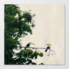 The Toucan Tree Canvas Print