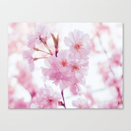 Pink Springtime Cherry Blossom Pink Petals Floral Photo Soft Texture Relaxing Monochromatic Palette Canvas Print