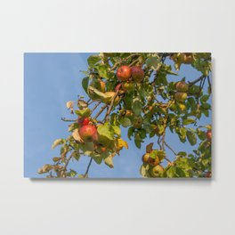 Appletree Metal Print