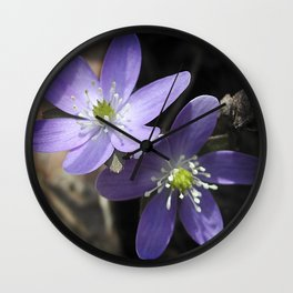 Woodland hepatica, Anemone acutiloba - a sure sign of spring Wall Clock