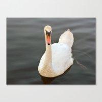 black swan Canvas Prints featuring Swan by Lynn Bolt