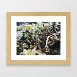 Little Lights Framed Art Print