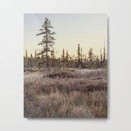 frosty Adirondack morning Metal Print