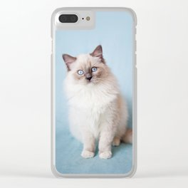 Blue eyed Ragdoll kitty sitting Clear iPhone Case