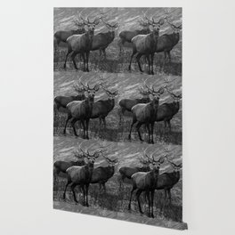 The four stags on the loch b/w Wallpaper