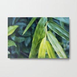 Bamboo Leaf Zen Poster Metal Print